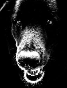dog brings bad memories