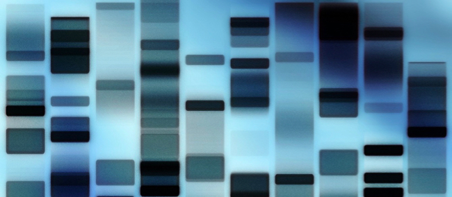 family history in dna